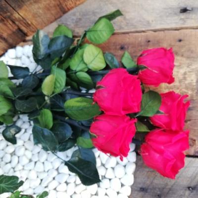 Rose Eternelle à la tige